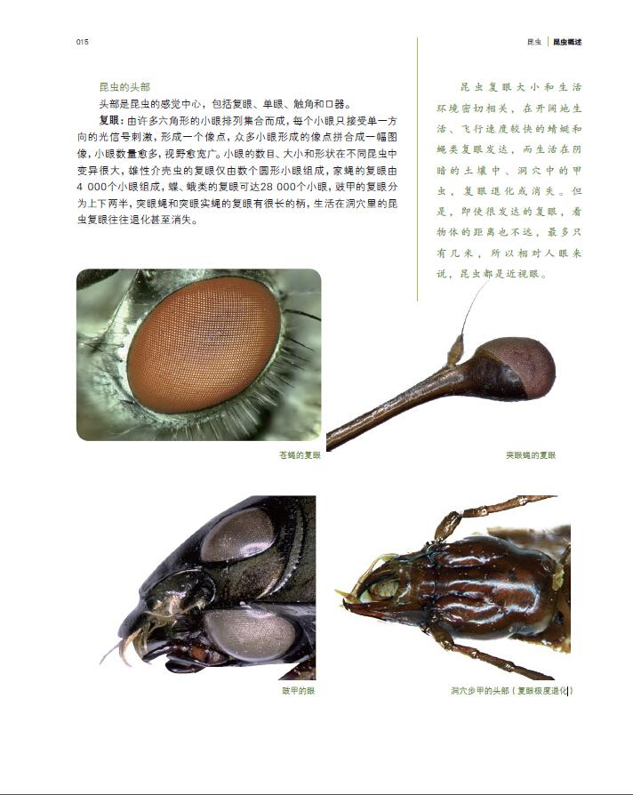 国家动物博物馆精品研究 昆虫