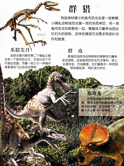 恐龙时代 恐龙的骨骼 恐龙的种类